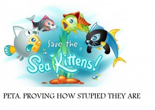 n34580836405 1348383 2872[1] 500x355 sea kittens wtf Politics Humor